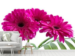 The bouquet of bright pink gerbera