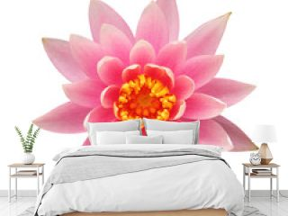 Water lily isolated on white background – clipping path included