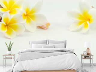 frangipani flower on white background