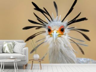 Secretary bird portrait