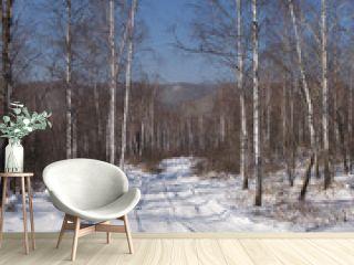 Birch wood in the winter