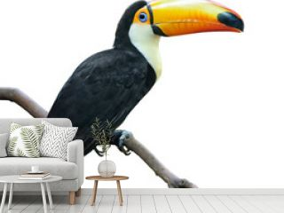 isolated bird. Toucan sits on a branch isolated on white background
