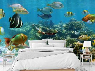 Underwater panorama coral reef with shoal of colorful tropical fish, Caribbean sea
