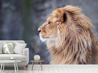 Portrait of a lion in profile