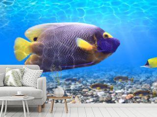 Underwater world - panorama