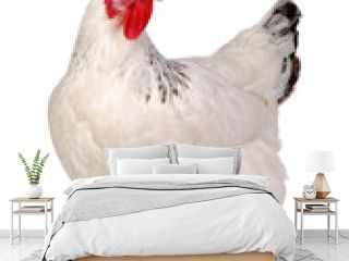 Chicken isolated on white.