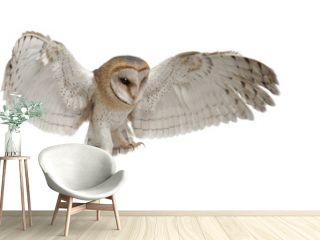 Barn Owl, Tyto alba, 4 months old