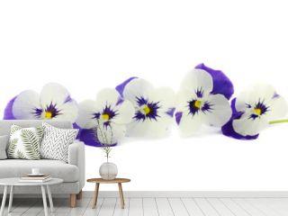 a row of purple pansies