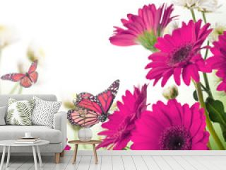 Multi-colored gerbera daisies and butterfly on a white