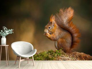 Red squirrel classic pose