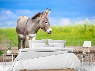 Grey donkey in field