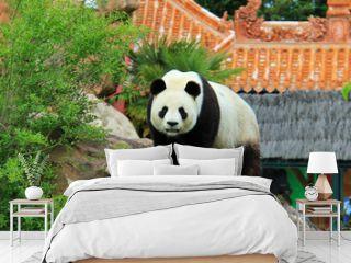 Un panda géant en captivité