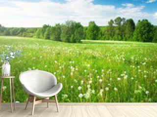 Field with dandelions
