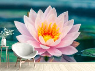 A beautiful pink waterlily or lotus flower in pond