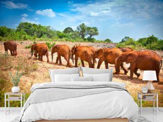 Herd of baby elephants , Kenya.