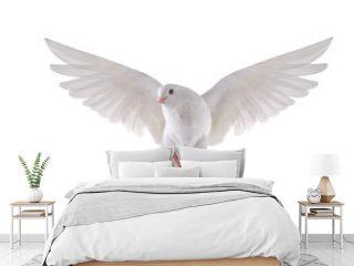 flying dove