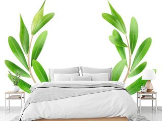 Isolated branches. Two olive branches isolated on white background, with clipping path