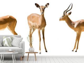 Set of impalas.  Isolated on white