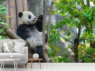 Cute panda bear sitting in tree