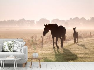 horse and foal silhouettes in fog
