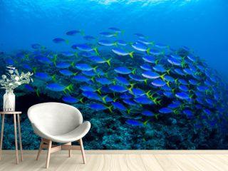 underwaterscape