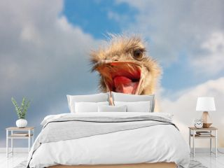 Ostrich head closeup with open mouth outdoors