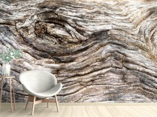 Macro of a bark of olive tree