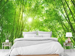 Bamboo forest and sun light