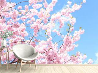 cherry blossom / cherry tree