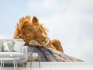 lion on the rock