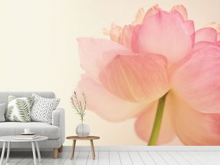 pink lotus in soft color and blur style