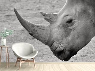 Portrait of a Southern White Rhinoceros