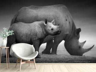 Black Rhinoceros calf and cow