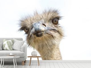 Close up view of an ostrich bird head