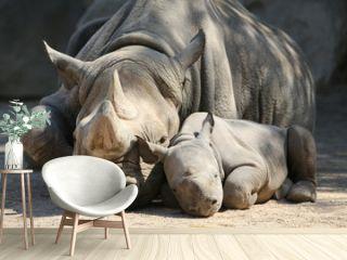 Nashornmama mit Baby