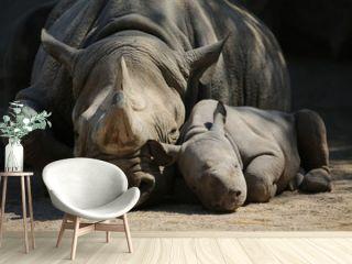 Nashornmutter mit Baby