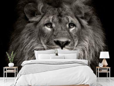 arrogant lion