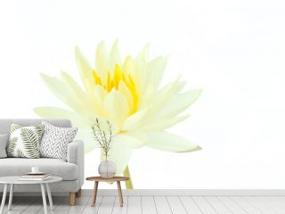 white lotus flower isolated on white background (water lily)