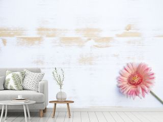 pink gerbera on white rustic wooden background