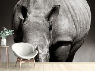 White Rhinoceros  in due-tone