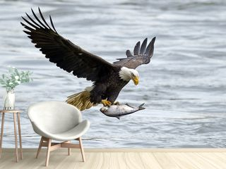 American Bald Eagle with Large Fish