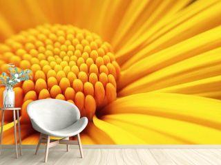 macro shot of maxican sunflower