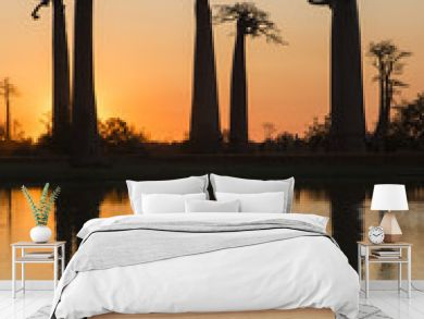 Baobabs at sunrise near the water with reflection. Madagascar. An excellent illustration