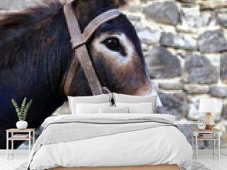donkey-otsagabia