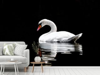 Swan swin on lake with black backround