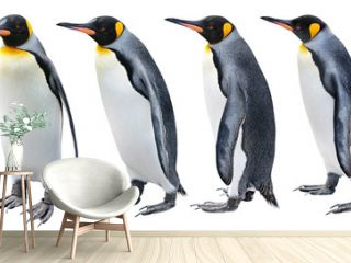 King Penguin in various poses isolated on white with clipping path