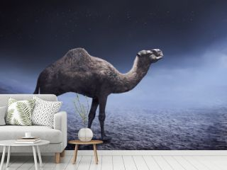 Image of camel