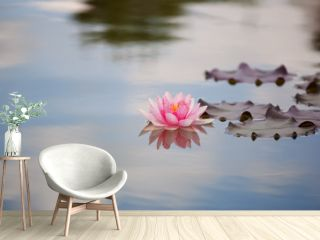 Pink water lily in a quiet pond.