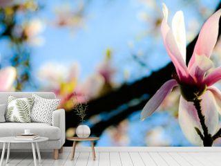 roas magnolien