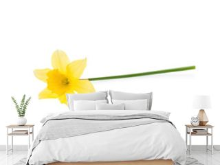 Yellow daffodil isolated on white.